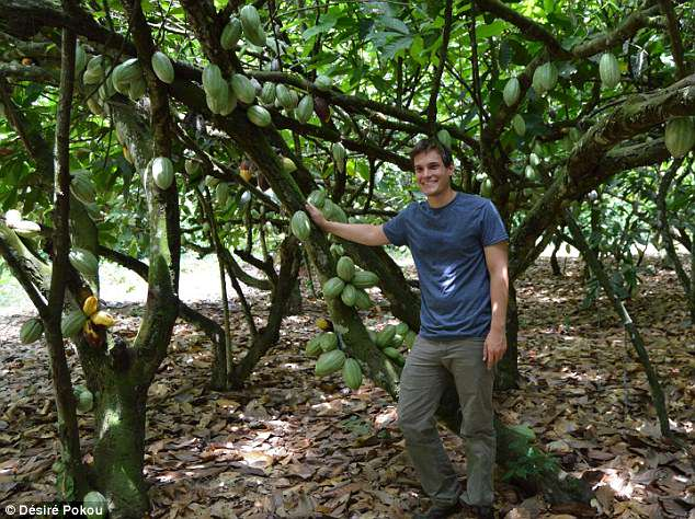 A gene-editing tool CRISPR-Cas9 could help breed cacao trees that exhibit desirable traits such as enhanced resistance to diseases, a Penn State study finds. Pictured: lead author Andrew Fister in the Ivory Coast