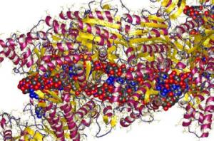 三项新研究显示在CRISPR-Cas9编辑后人类胚胎基因组中的有害变化