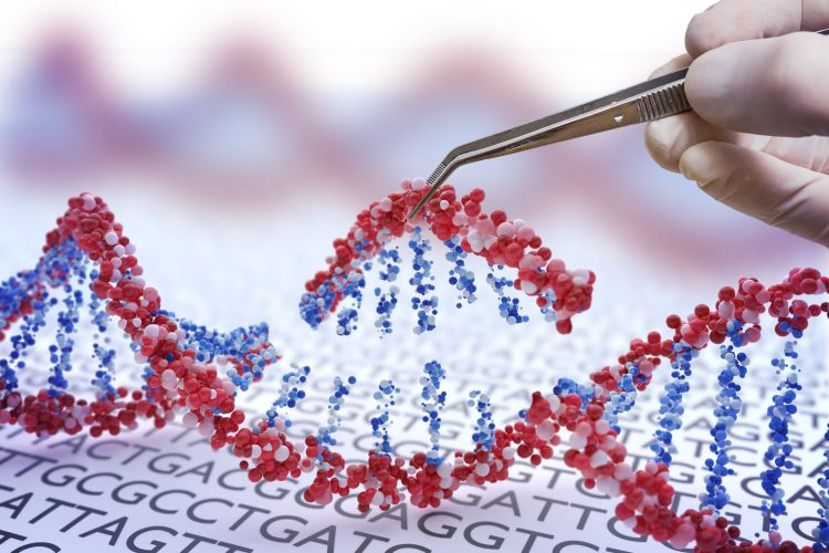 section of DNA being removed/added - idea of gene editing or gene therapy
