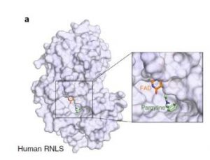 Nature sub-Journal:say goodbye to insulin injections,CRISPR screening to find Type 1 diabetes β-cell protection…