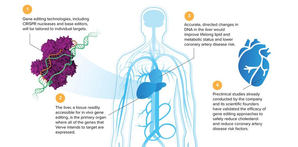 gene editing medicine diagram