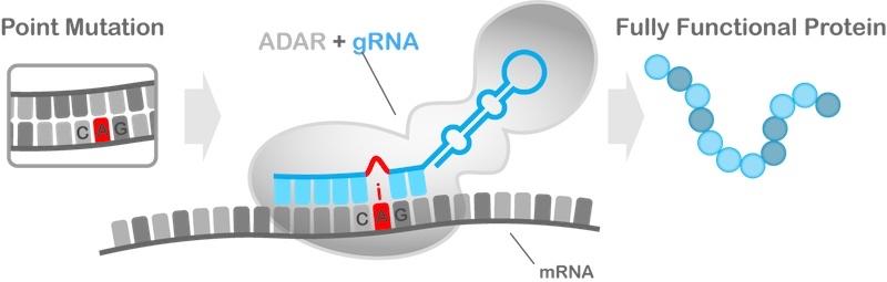 Shape Therapeutics RNA editing