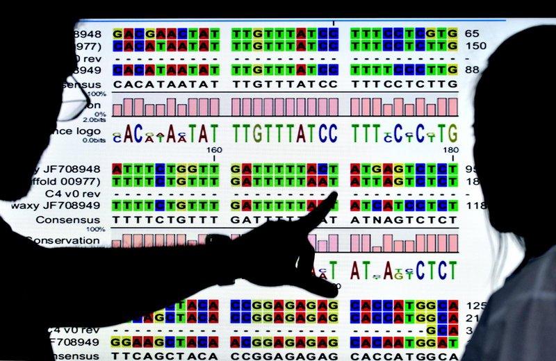 Cassava genome data