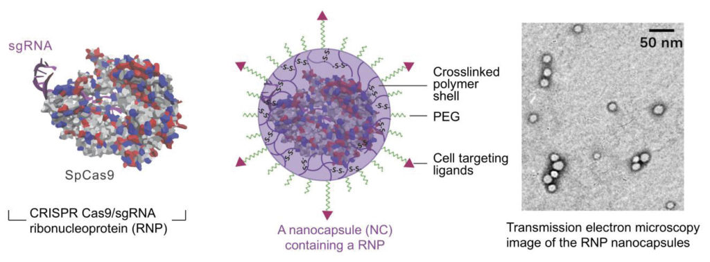 nanocapsule delivery system