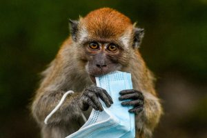 Scientists Used Crispr To Edit HIV-Like Viruses In Monkey DNA – Forbes