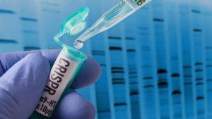 CRISPR improves method for studying gene functions | Cornell Chronicle – Cornell Chronicle